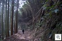 Pieter.org - bamboe